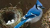 The Bluejay Speaks: How to Rise above the Chatter, Grow Followers, and Deliver Rich, Powerful Content on the Web